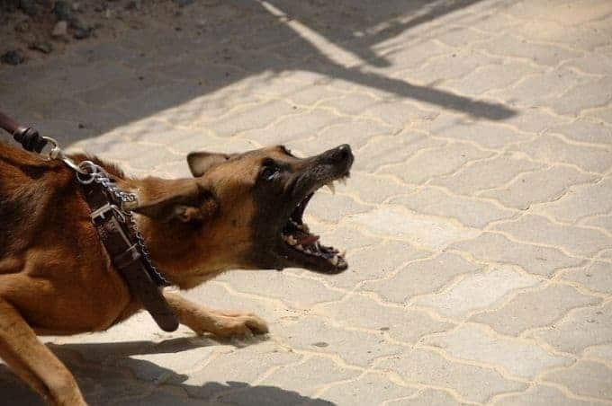 Pourquoi-un-chien-devient-il-agressif